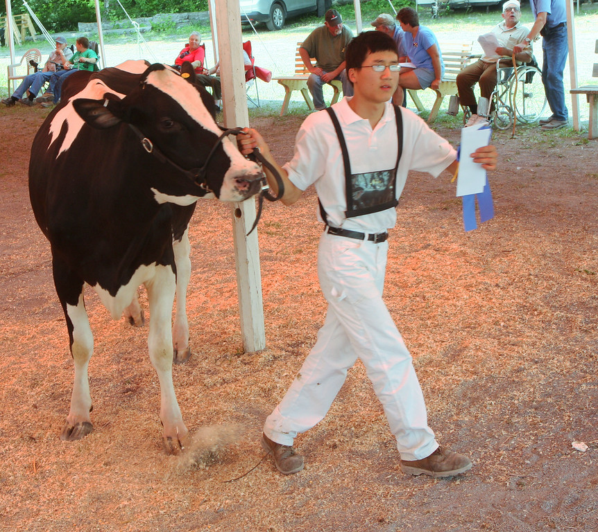 Description of . Zachary vanLieshout leaves the show ring with a blue ribbon in the Milking Junior 3year old class  at the Boonville Oneida County Fair on Tuesday, July 22, 2014 in Boonville. the fair runs through Sunday, July 27, 2014.  JOHN HAEGER-ONEIDA DAILY DISPATCH @ONEIDAPHOTO ON TWITTER