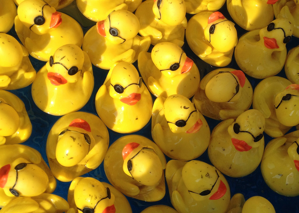 Description of . Rubber ducks float at the duck picking  game  at the Boonville Oneida County Fair on Tuesday, July 22, 2014 in Boonville. the fair runs through Sunday, July 27, 2014.  JOHN HAEGER-ONEIDA DAILY DISPATCH @ONEIDAPHOTO ON TWITTER