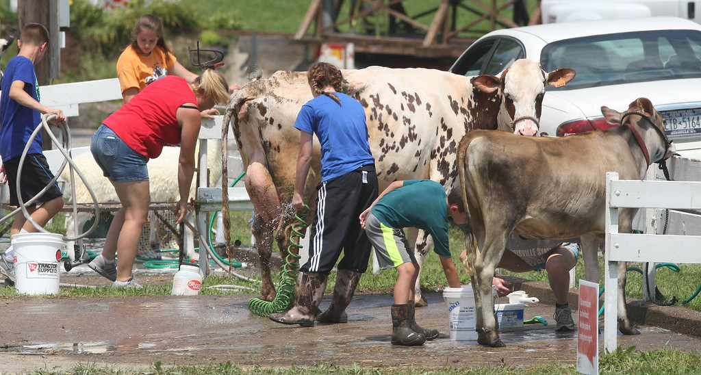Description of . Competitors wash their cattle as they prepare for showing     at the Boonville Oneida County Fair on Tuesday, July 22, 2014 in Boonville. the fair runs through Sunday, July 27, 2014.  JOHN HAEGER-ONEIDA DAILY DISPATCH @ONEIDAPHOTO ON TWITTER