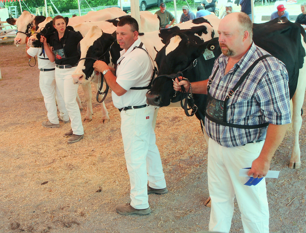 Description of . Brett Roberts along with fellow competitors show cattle in the Senior two year class at the Boonville Oneida County Fair on Tuesday, July 22, 2014 in Boonville. the fair runs through Sunday, July 27, 2014.  JOHN HAEGER-ONEIDA DAILY DISPATCH @ONEIDAPHOTO ON TWITTER